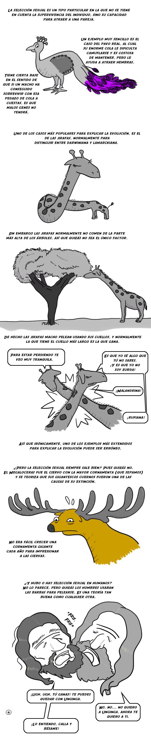 Tira704
